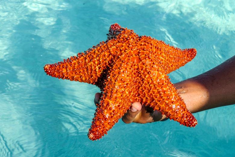 estrella-mar-isla-saona